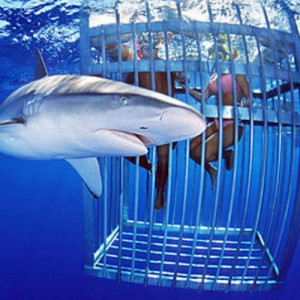 shark cage 4b